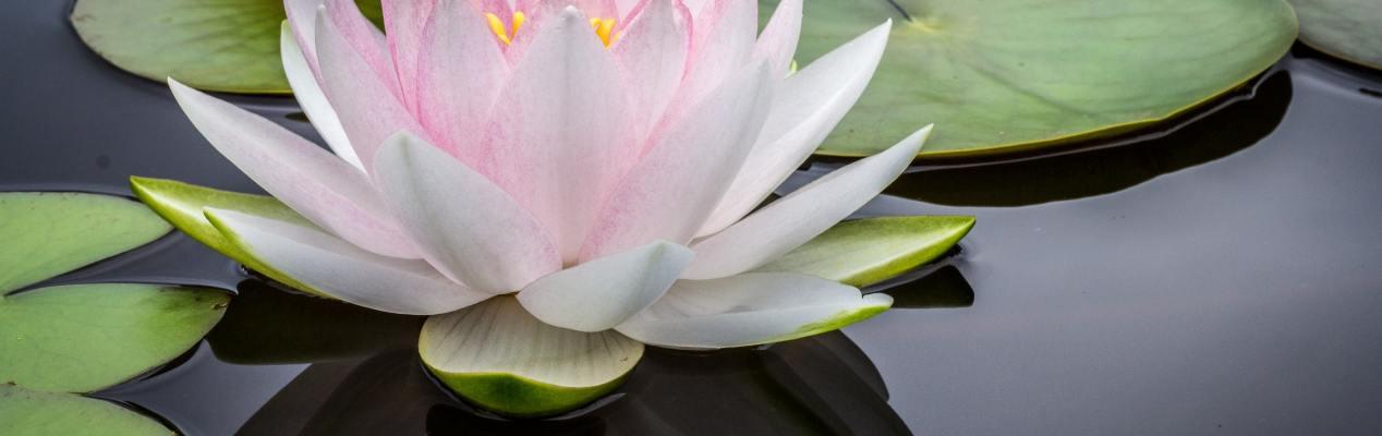 Meditazione… ma quale?