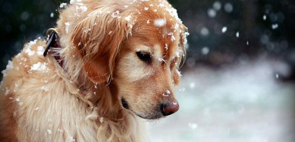 Προστάτεψε τον σκύλο σου από το κρύο