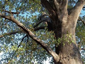 miss_tree12-21-2010_2.jpg