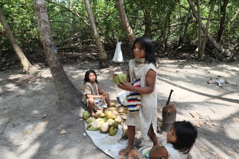 Kogui youths selling fresh coconut water in Tayrona National Park, Colombia