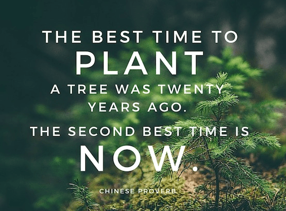 financial advisor winnipeg - best time to plant a tree is 20 years ago. 2nd best time is NOW.