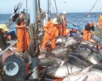 pêche Mauritanie-UE