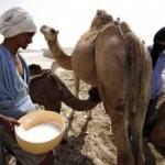 Mauritanie: les nouveautés de la fiscalité douanière