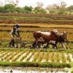 Niger : Le FIDA appuie le secteur agricole