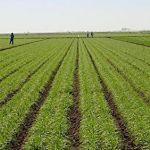 Sénégal : Dakar, capitale de l'agriculture durant 3 jours