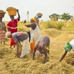 Sénégal: Hausse de 57% de la production agricole