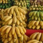 Sénégal : 6,5 milliards  de F CFA générés par le secteur de la banane en 2015