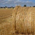 Assurance agricole au Maroc: Saham fait marche arrière