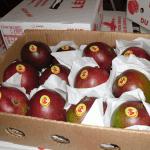 Sénégal: Les exportations de mangues estimées à 16 milles tonnes en 2015