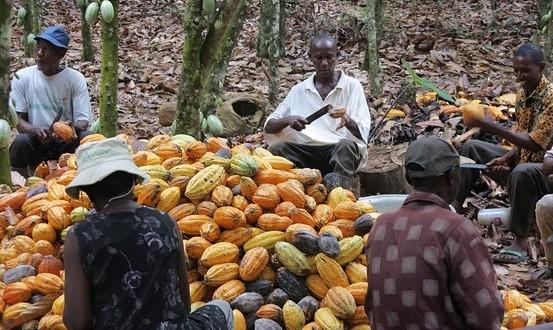 contrebande-cacao-553x330