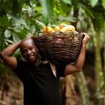 Côte d'Ivoire: le revenu des paysans en hausse de 68% en quatre ans