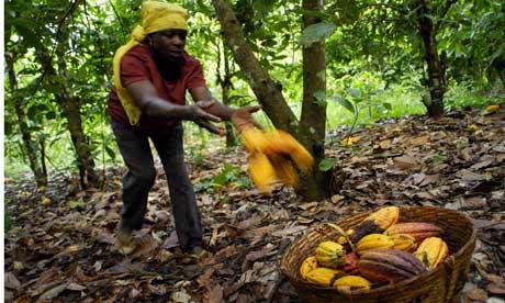 ghana_le_prix_de_la_tonne_du_cacao_fixe_a_1609_euros