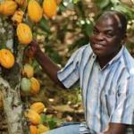 Côte d'Ivoire : le marocain OCP  à l'assaut des plantations de cacao