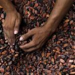 Côte d'Ivoire: avis de tempête sur le cacao
