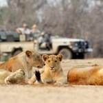 Zambie: une nouvelle taxe sur le tourisme