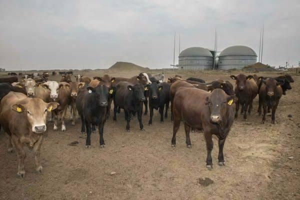 biogaz_afrique_du_sud_photo_bio2watt