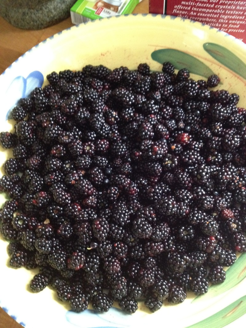 Bowl of Wild Blackberries