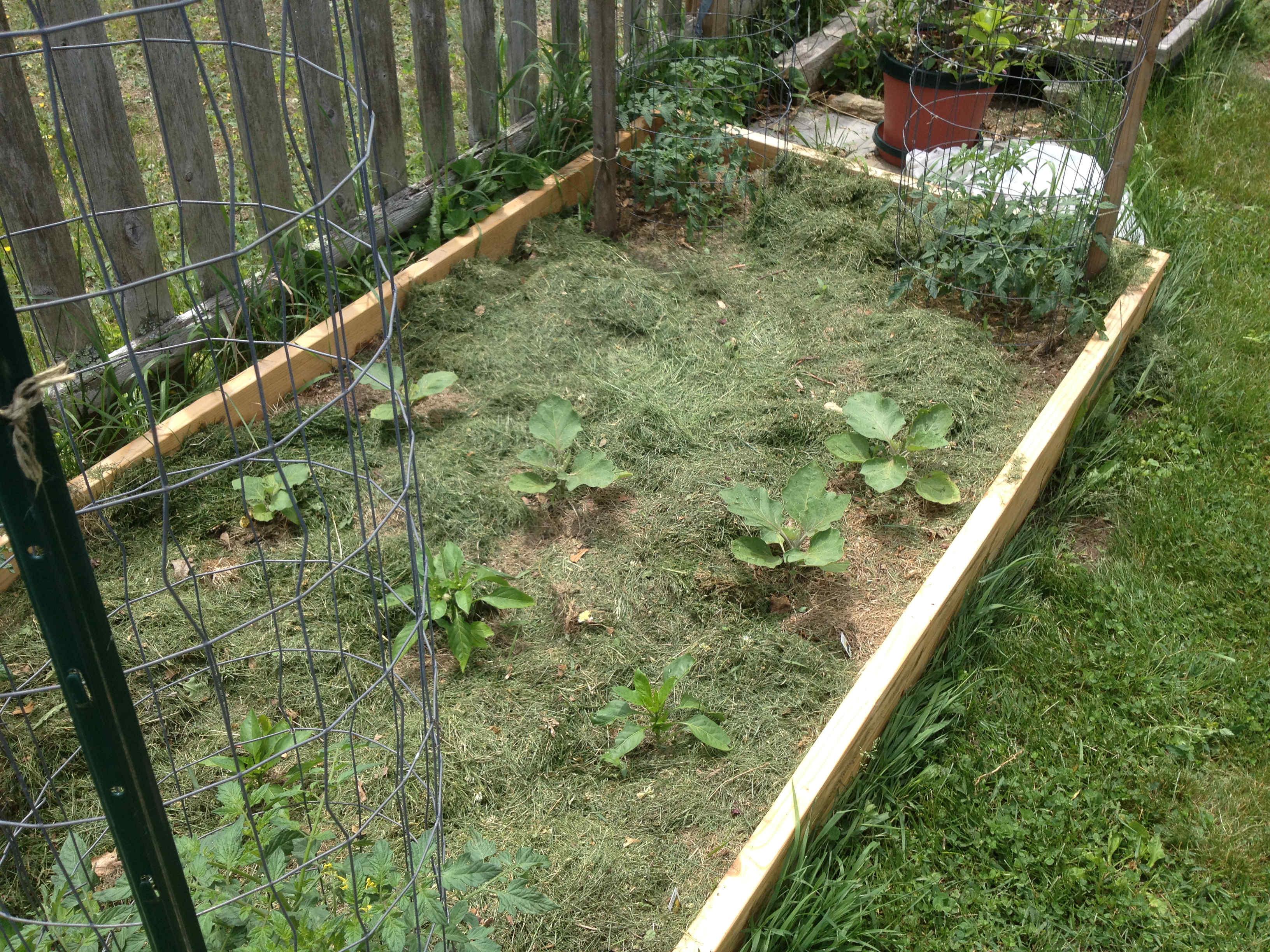 eggplant bed