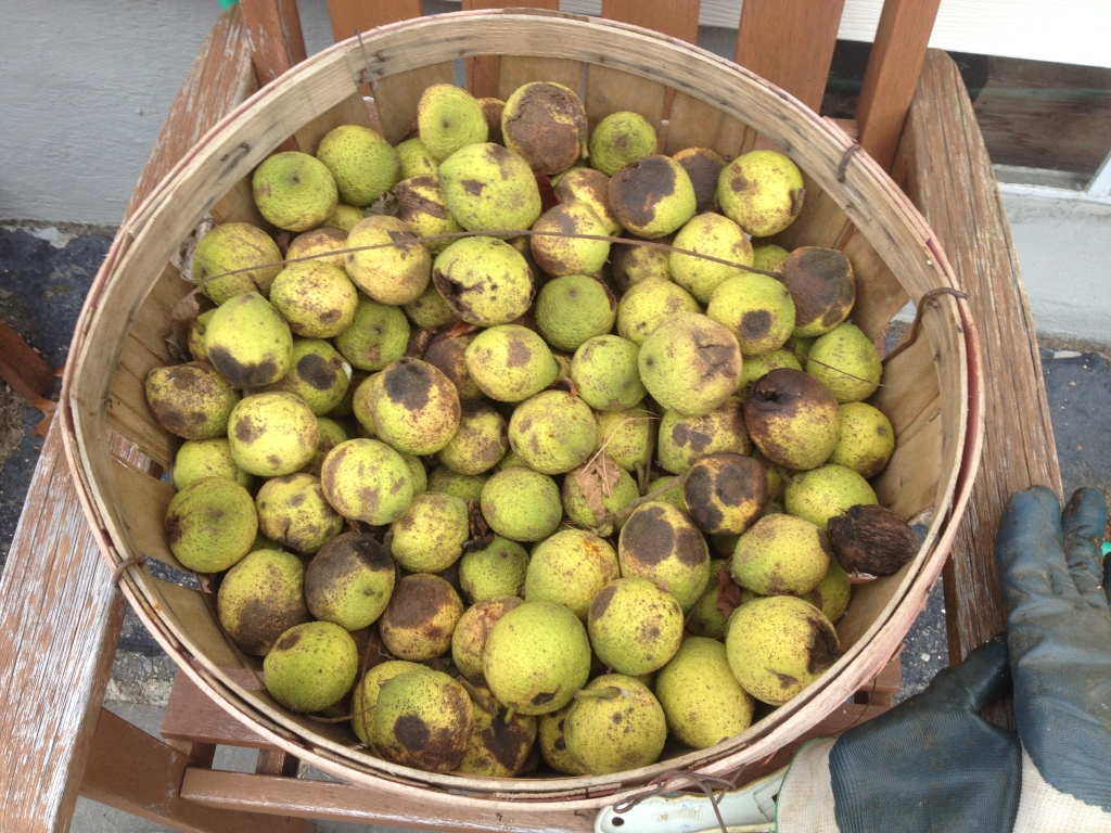 Black Walnuts Basket