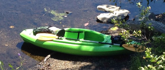 Foraging for Wild Blueberries With a Kayak