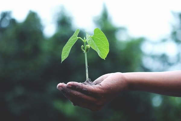 Small tree in hand representing advantages of working for a large company