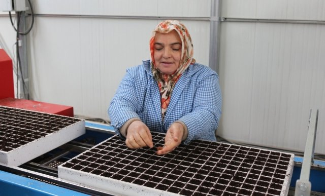 Bafra'da Kurulan Tesis, Tüm Türkiye'nin Fide İhtiyacını Karşılamaya Talip