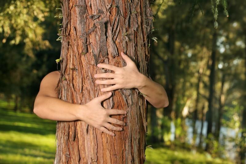 Nowelizacja ustawy o wycince drzew zaostrzenie przepisów