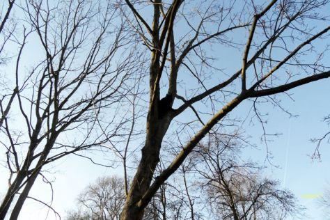 Purzel im Baum - gut getarnt