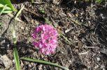 Und noch einmal kleine lila Blüten
