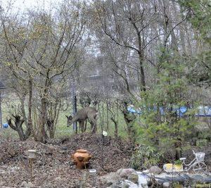Der Rehbock auf dem Feldherrenhügel am 27.03.2011