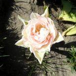 jcgSAM_13131[Web Garten] 21.04.2015 14_55_35