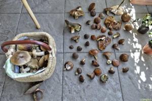 Erfolgreiche Pilzsuche
