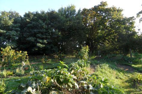 Beet Amor im Herbst