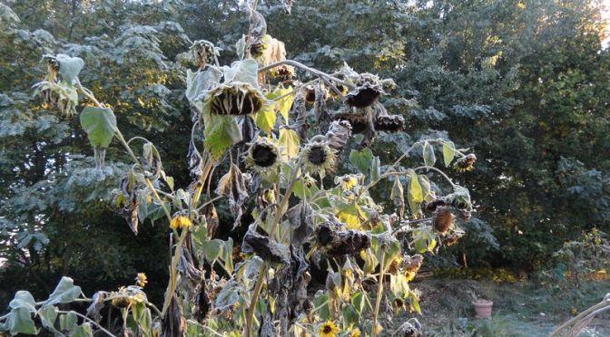 Frostiger Sonntagmorgen