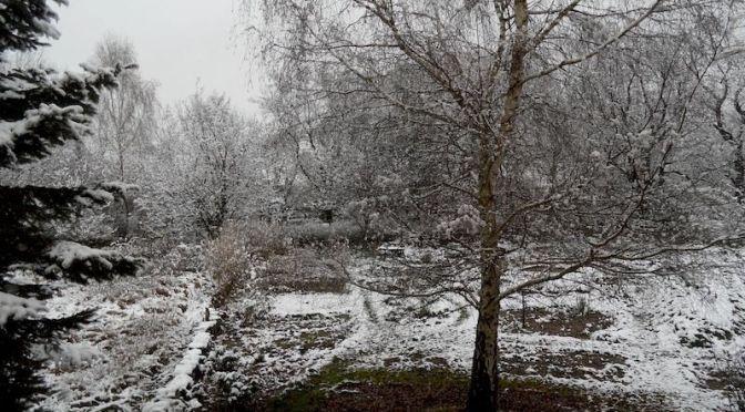 Erster Schnee 23.11.15