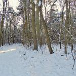 Waldwanderung 3. Kalenderwoche 2016 Bild 1