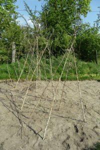 Bohnen-Tipis aus Baumspinat-Holz