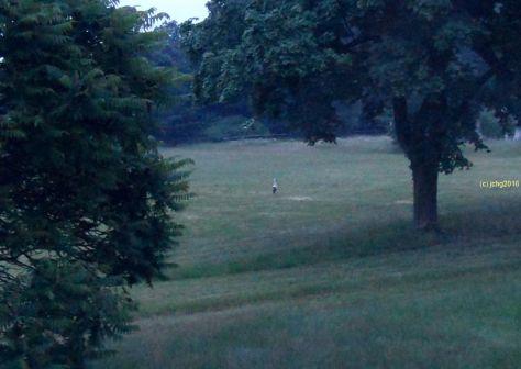 Storch auf der Wiese am frühen Montag
