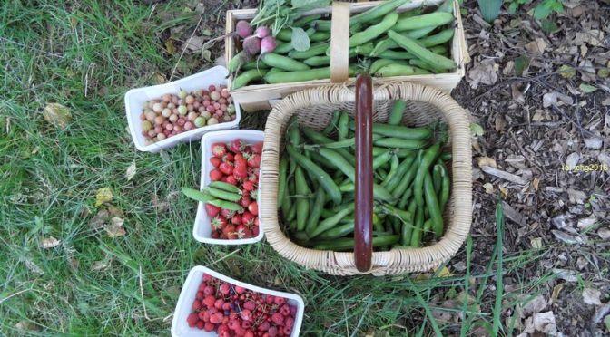 Obst- und Gemüseernte am vergangenen Sonntag