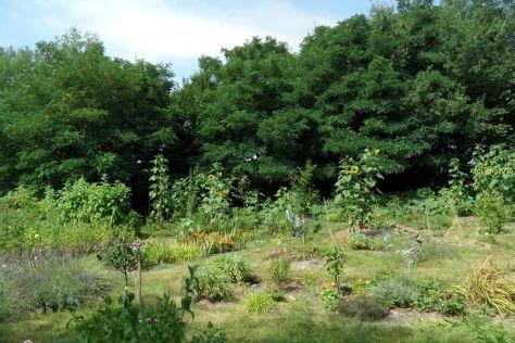 Gartenbilder am 30.07 Bild 1