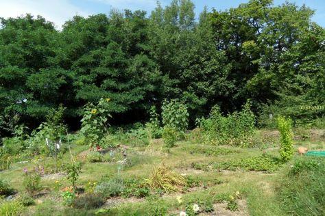 Gartenbilder am 30.07 Bild 3