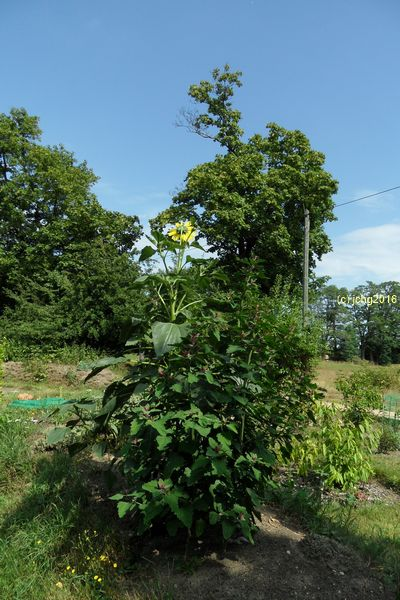 Gartenblicke 4