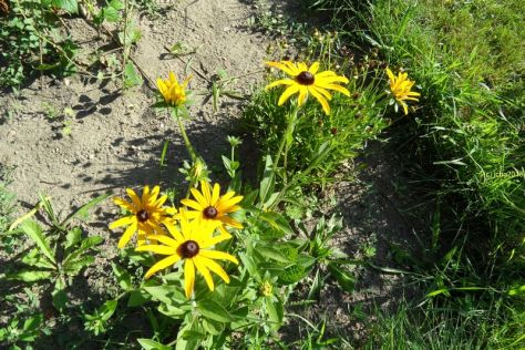 Gelbe Blüten 2