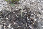 Die sechste Heidelbeerpflanze am 09.03.2017