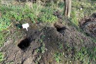 """Irgendwer gräbt im Beet """"Weissdorn"""" Gänge 25.03.2017"""