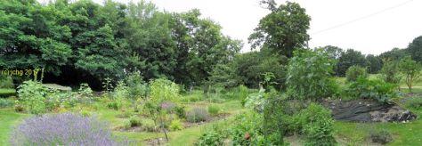 Eine Gartenansicht am 22.07.2017