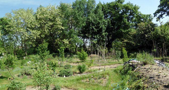 Ein Gartenblick 14.05.2018