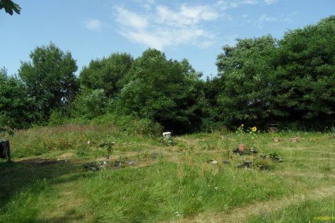 Unser Garten Juli 2013