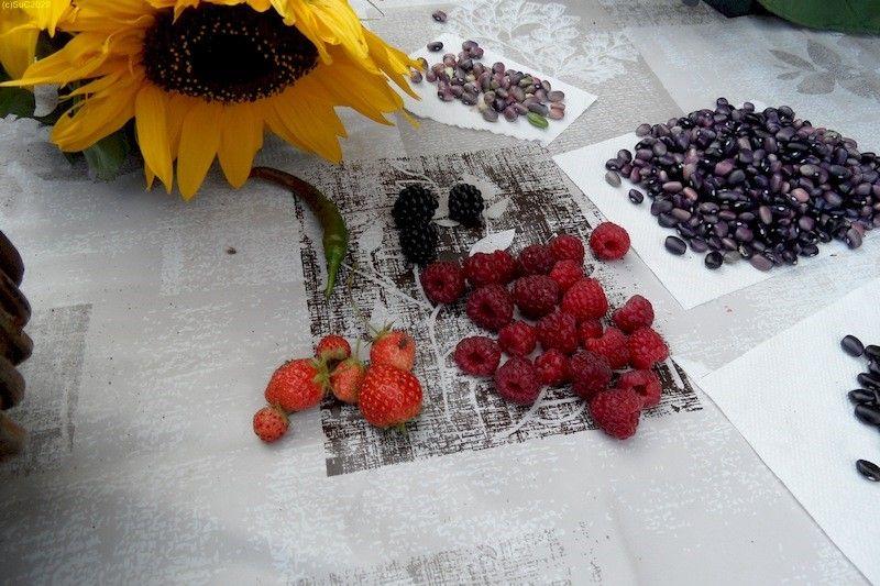 Bohnen, Brombeeren, Erdbeeren, Himbeeren geerntet im Spätsommer September 2017