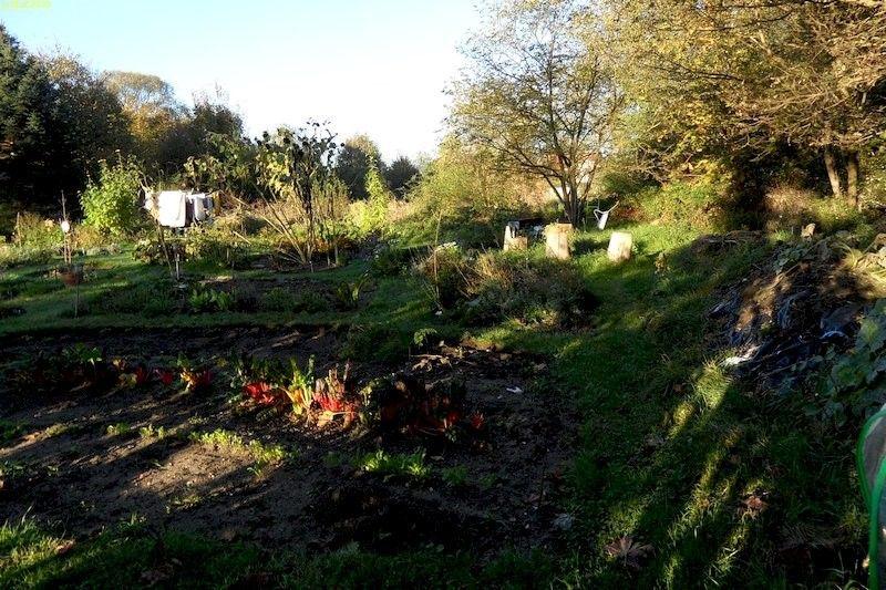 Der Garten Bild 4 42, Kalenderwoche 2014